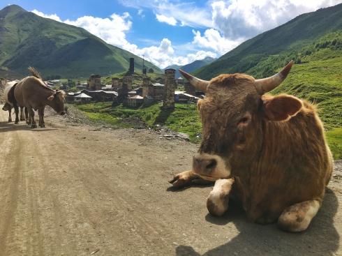 Vaca en la carretera de Mestia a Ushguli, en Georgia